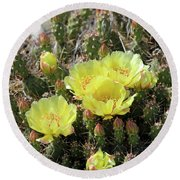 Round Beach Towel featuring the photograph Yellow Cactus Blooms by Ann E Robson