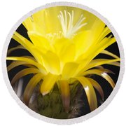 Yellow Cactus Flower Round Beach Towel by Jim And Emily Bush