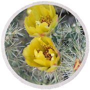 Yellow Cholla Blossoms Round Beach Towel