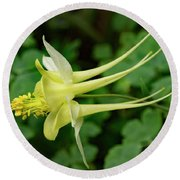 Round Beach Towel featuring the photograph Yellow Columbine Profile by Jean Noren