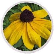 Round Beach Towel featuring the photograph Yellow Coneflower by Arlene Carmel