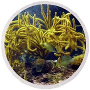 Round Beach Towel featuring the photograph Yellow Coral Dance by Francesca Mackenney
