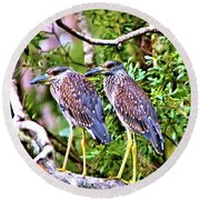 Yellow Crested Night Herons Round Beach Towel by James Potts