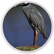 Yellow-crowned Night Heron Round Beach Towel by Sally Weigand