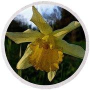 Yellow Daffodils 5 Round Beach Towel