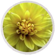 Yellow Dahlia Round Beach Towel