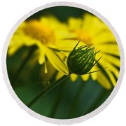Yellow Daisy Bud Round Beach Towel