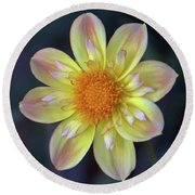 Yellow Dwarf Dahlia Round Beach Towel
