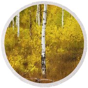 Round Beach Towel featuring the photograph Yellow Fall Aspen by Craig J Satterlee