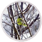 Round Beach Towel featuring the photograph Yellow Finch by Bonnie Muir