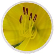 Round Beach Towel featuring the photograph Yellow Flower Beauty by Jasna Gopic