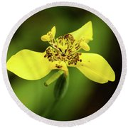 Round Beach Towel featuring the photograph Yellow Orchid by Cristina Stefan