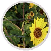 Yellow Flower Escaping From A Barb Wire Fence Round Beach Towel