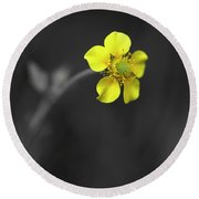 Yellow Flower Round Beach Towel by Rachel Mirror