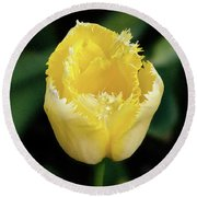 Yellow Fringe Tulip Round Beach Towel by Victoria Harrington