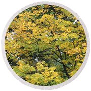 Yellow Gold Fall Tree Round Beach Towel