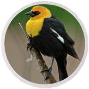 Yellow Headed Blackbird Round Beach Towel