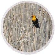 Yellow-headed Blackbird Round Beach Towel by Kathy M Krause