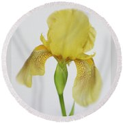 Round Beach Towel featuring the photograph Yellow Iris A Symbol Of Passion by David and Carol Kelly