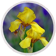 Round Beach Towel featuring the photograph Yellow Iris by Rodney Campbell