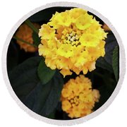 Round Beach Towel featuring the photograph Yellow Lantanas Along The Scenic Drive by Mr Photojimsf