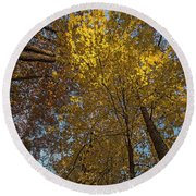 Yellow-leaves-maple-forest Round Beach Towel