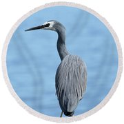 Round Beach Towel featuring the photograph Yellow Legs 01 by Kevin Chippindall