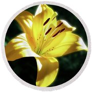 Yellow Lily In Sunlight Round Beach Towel