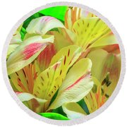 Yellow Peruvian Lilies In Bloom Round Beach Towel