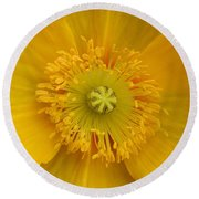 Yellow Poppy Flower Center Round Beach Towel