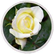 Yellow Rose 1 Round Beach Towel