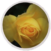 Yellow Rose Garden Two Round Beach Towel