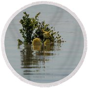 Yellow Roses Emerging From The Sea Round Beach Towel