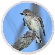 Yellow-rumped Warbler Itch Round Beach Towel