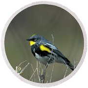 Yellow-rumped Warbler Round Beach Towel by Mike Dawson