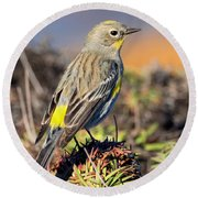Yellow-rumped Warbler On The Bluff Round Beach Towel