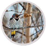Yellow-shafted Northern Flicker Staying Warm Round Beach Towel