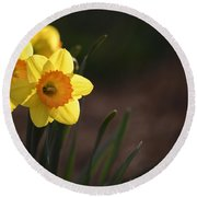 Yellow Spring Daffodils Round Beach Towel