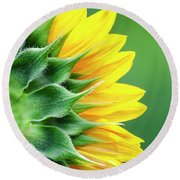 Yellow Sunflower Round Beach Towel by Christina Rollo