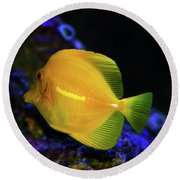 Round Beach Towel featuring the photograph Yellow Tang by Anthony Jones