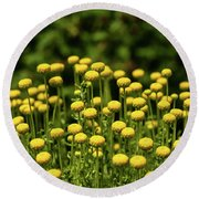 Yellow Tansy Round Beach Towel