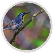 Yellow-throated Warbler Round Beach Towel