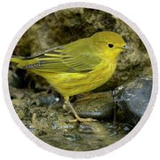 Round Beach Towel featuring the photograph Yellow Warbler by Doug Herr