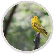 Yellow Warbler In Song Round Beach Towel