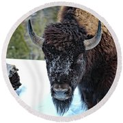 Yellowstone Buffalo Stare-down Round Beach Towel