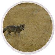 Yellowstone Coyote Round Beach Towel