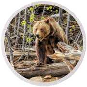 Round Beach Towel featuring the painting Yellowstone Grizzly Bear by Christopher Arndt