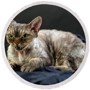Yogi - Grumpy Cat - Pure-bred Devon Rex  Round Beach Towel