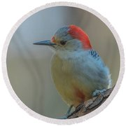 Young Red Bellied Woodpecker Round Beach Towel
