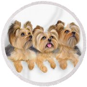 Yorkie Trio Round Beach Towel